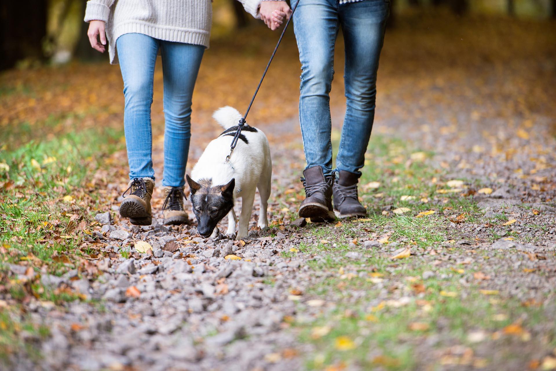 Romantic Walks