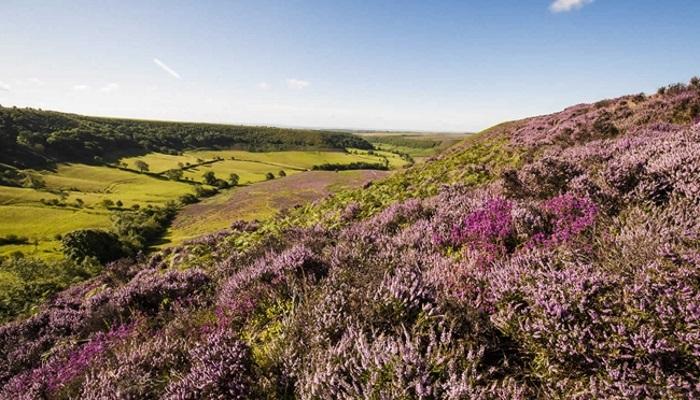 heather moors