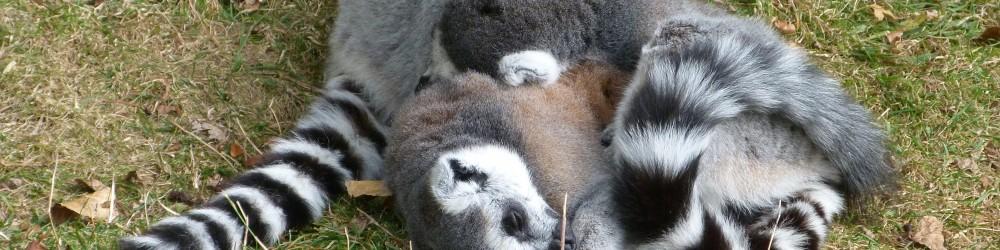 Blackpool Zoo Header