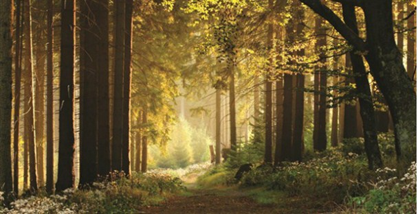 Cropped Forest_608x312