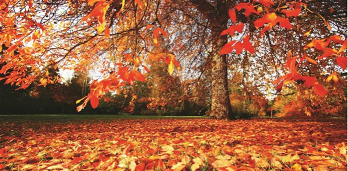 Cropped Leaves_690x340